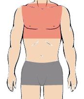 メンズ脱毛部位:胸全体