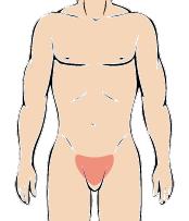 メンズ脱毛部位:Vライン