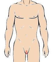 メンズ脱毛部位:Iライン