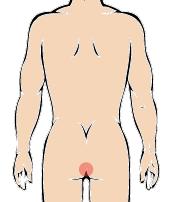メンズ脱毛部位:Oライン